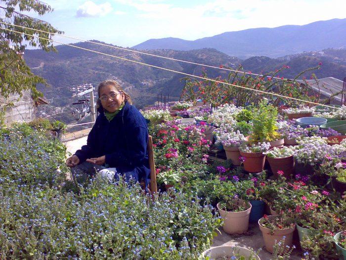 Shrieking Violet head gardener in 2018